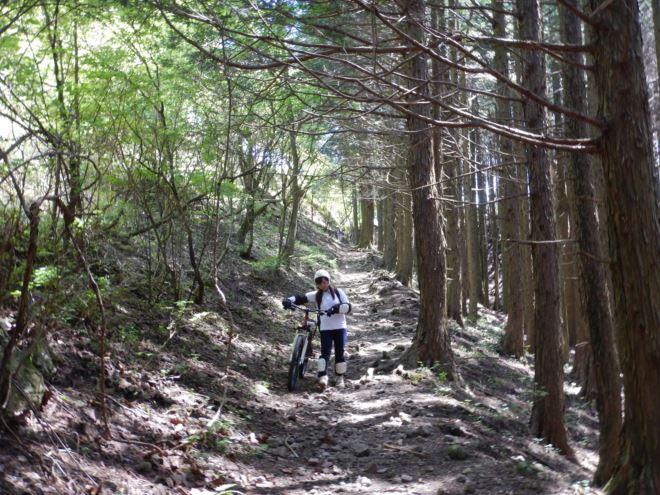 静岡 自然 アクティビティ