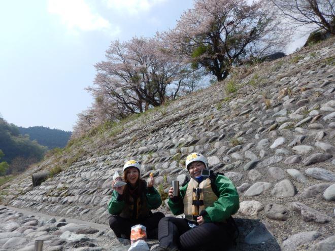 静岡でお花見 富士川でお花見